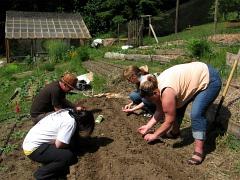 LEAF planting terraced bed